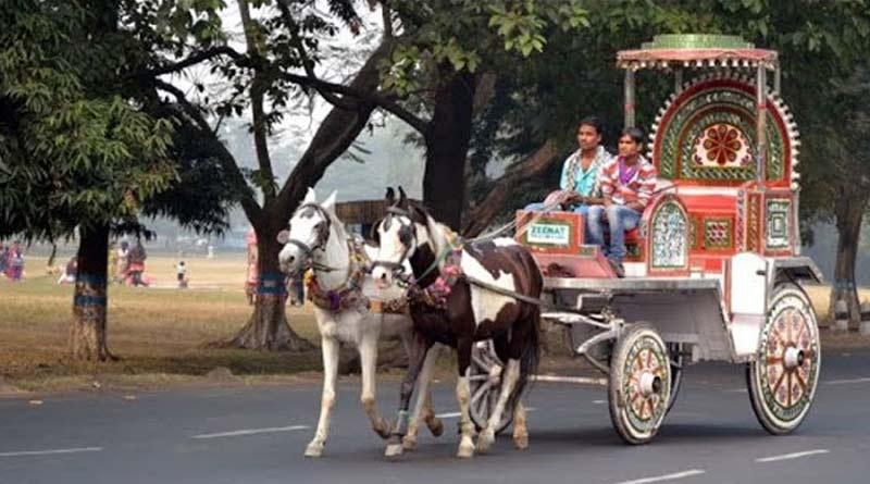 Due to lack of food five horses dies in Kolkata । Sangbad Pratidin