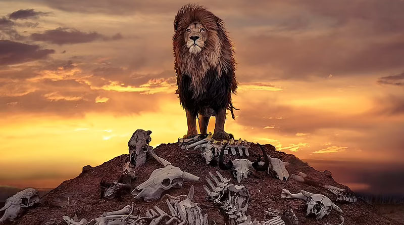 British photographer captures mesmerizing pic of 'Lion king' of the hill | Sangbad Pratidin
