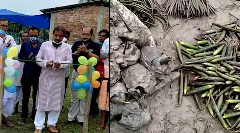 New initiative to save Sunderbans launched on 'Mangrove Diwas' | Sangbad Pratidin