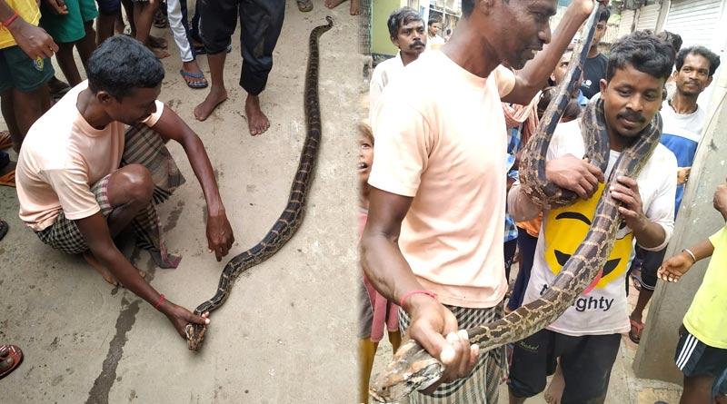 Python recovered from Purulia | Sangbad Pratidin