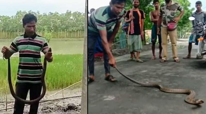Two brave youth rescue cobra at Hingalgunj, Sunderban | Sangbad Pratidin