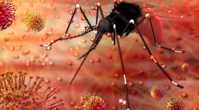 West Bengal Health department issues notice to make aware on Zika virus | Sangbad Pratidin
