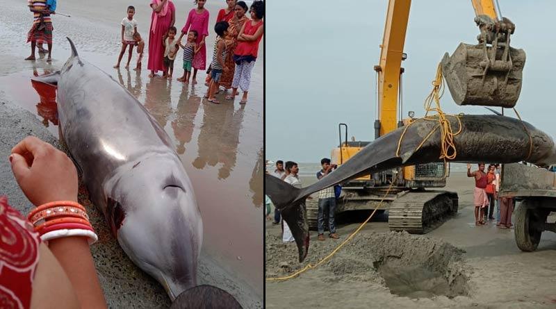 Bakkhali: Dead body of heavyweight dolphin recovered from seabeach, sparks chaos | Sangbad Pratidin