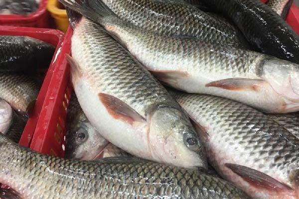 Ruhi-Fish