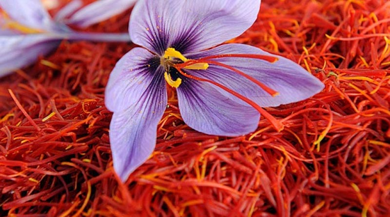 Now farmers to cultivate saffron in North Bengal initiative by food processing department | Sangbad Pratidin