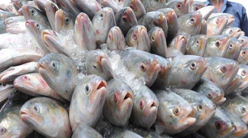 Bangladesh to export 2520 tonnes of Hilsa more ahead of Durga Puja | Sangbad Pratidin