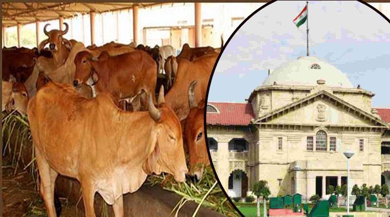 Allahabad High Court judge asks Centre to Make cow national animal | Sangbad Pratidin