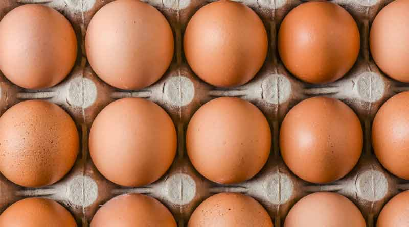 Infrustructure will be made to produce sufficient eggs in West Bengal within 3 months | Sangbad Pratidin
