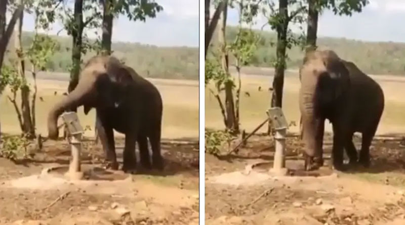 Elephant draws water from tubewell without wasting a drop, video goes viral | Sangbad Pratidin