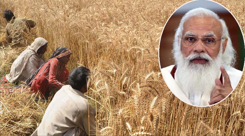 MSP hike: Centre hikes wheat support price by 2% for this crop year   Sangbad Pratidin