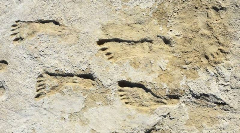 Footprints of old human in New Mexico are oldest evidence in the USA | Sangbad Pratidin