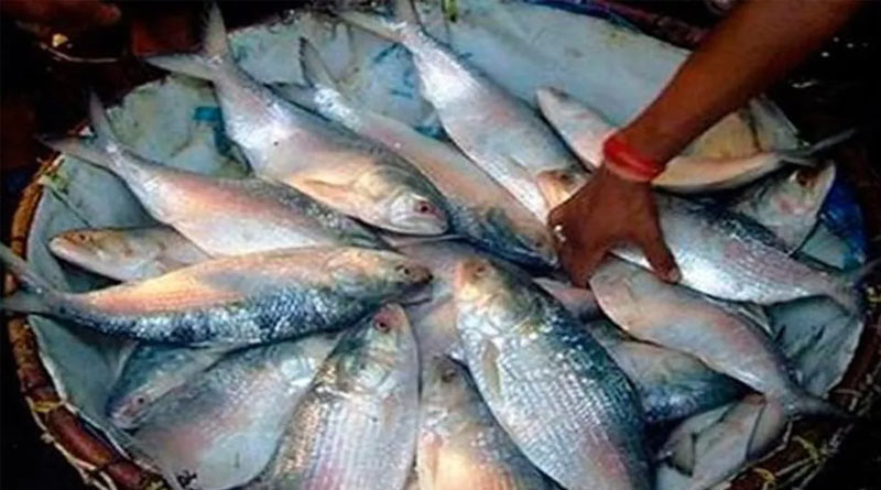 Bangladesh exports hilsa fish in West Bengal । Sangbad Pratidin