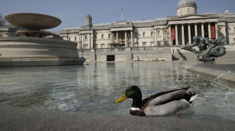 Scientists find talking duck in Australia named 'Ripper' keeping all jokes aside | Sangbad Pratidin