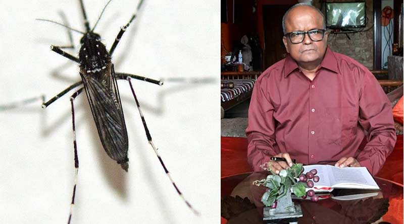 African deadly mosquito found in Kolkata that can spread many diseases | Sangbad Pratidin