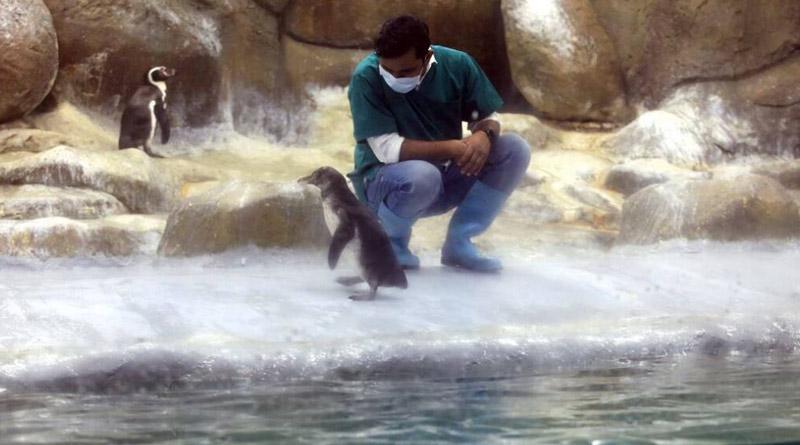 Mumbai's Byculla zoo welcomes two penguin chicks। Sangbad Pratidin