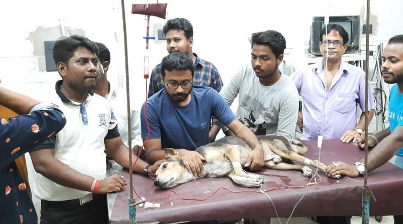 Blood trasmitted from one street dog to others to save them, rare initiative at Suri, Birbhum | Sangbad Pratidin