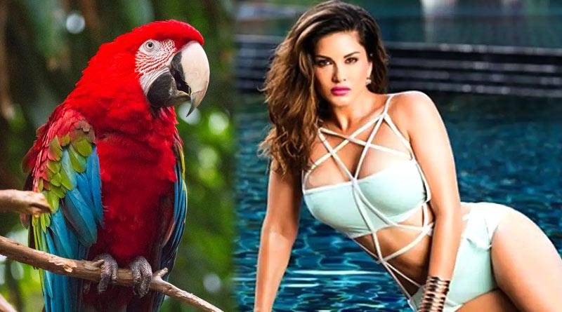 Sunny Leone tells the story of 'Naughty Macaw' of Maldives | Sangbad Pratidin
