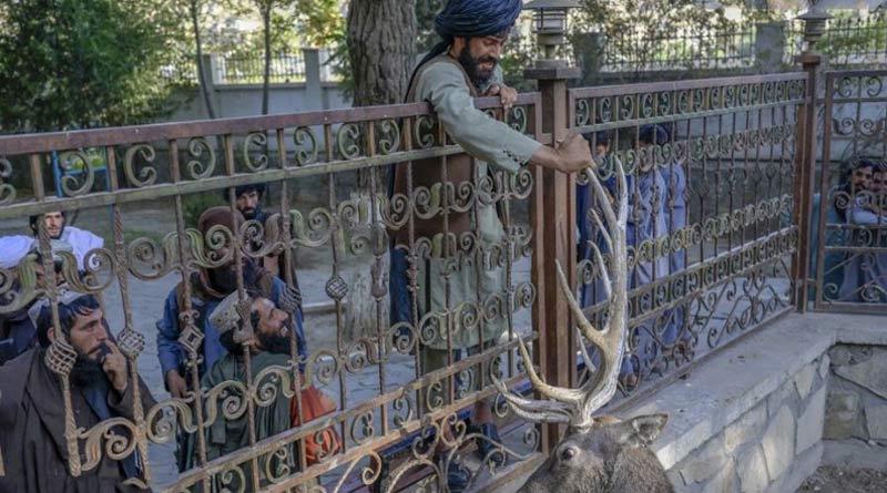 Taliban mingle with families and kids at Kabul Zoo। Sangbad Pratidin
