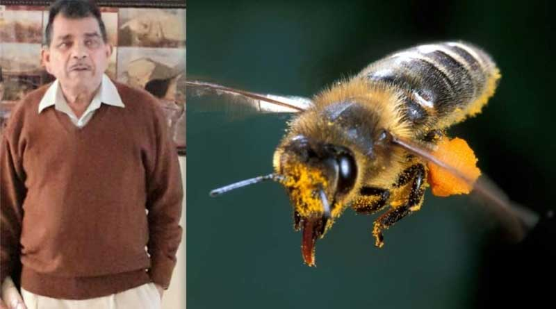 An elderly man dies after being attacked by bees in Durgapur | Sangbad Pratidin