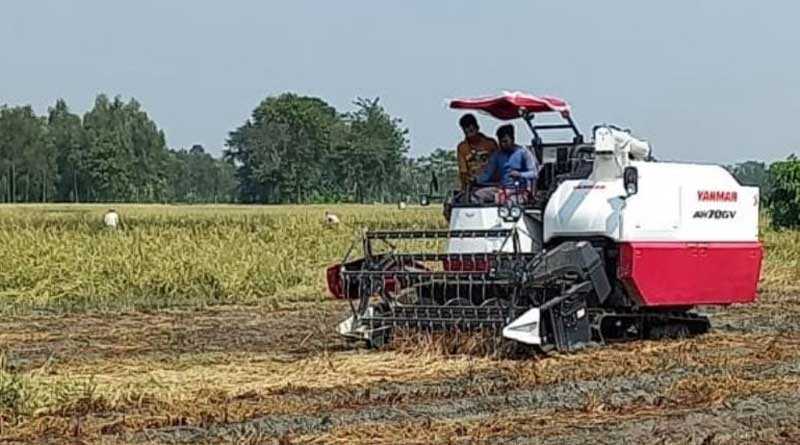 Bankura farmers' face rain wrath | Sangbad Pratidin