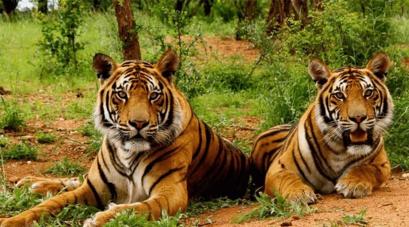 Jim Corbett National Park to be renamed as Ramganga National Park, says Minister | Sangbad Pratidin