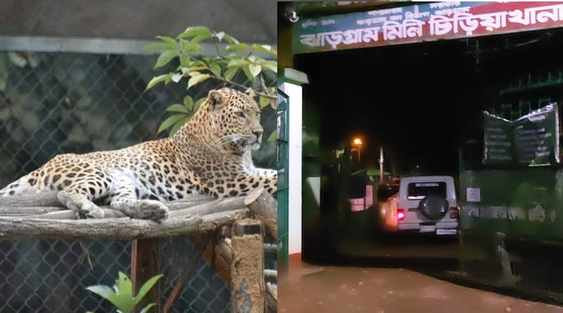 Leopard flees from Jhargram zoological park, people scared of the situation | Sangbad Pratidin
