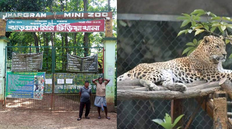 Leopard found into the Mini zoo, Jhargram after searching overnight   Sangbad Pratidin